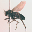 New records of long-legged flies (Diptera, ...